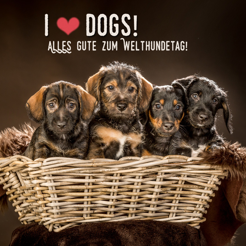 TIERE-tierfotos-aachen-hundefotoshooting-eschweiler-hundefotos-dueren-hundefotograf-aachen-Fotos-by-Domi-eschweiler-i-love-dogs-2019