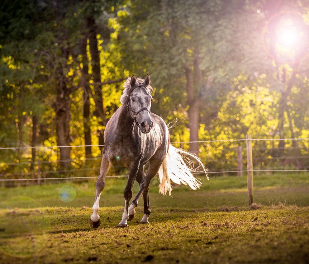 tiere-tierfotos-dueren-tierfotograf-eschweiler-pferdefotos-aachen-Fotos-By-Domi-009